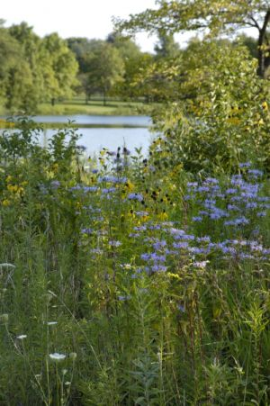 Bobolink Meadow and lagoon in Hyde Park