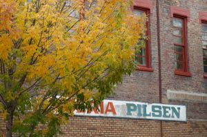 Vibrant autumn colors of Pilsen - Photos of Pilsen and Little Village