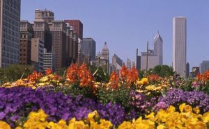 Chicago skyline and Grant Park flowers - Chicago Skyline Photography