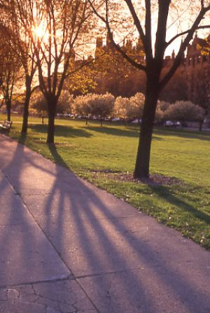 Midway Plaisance in Hyde Park,  - Chicago photos