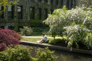 Bucolic scene at the Univ of Chicago