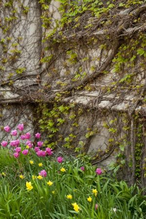 Spring blooms amid the Gothic architecture