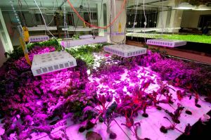 Hydroponic growing at The Plant