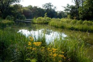 Bobolink Meadow in Jackson Park