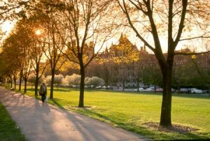 Midway Plaisance at University of Chicago
