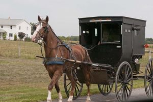 Traditional Amish horse and buggy